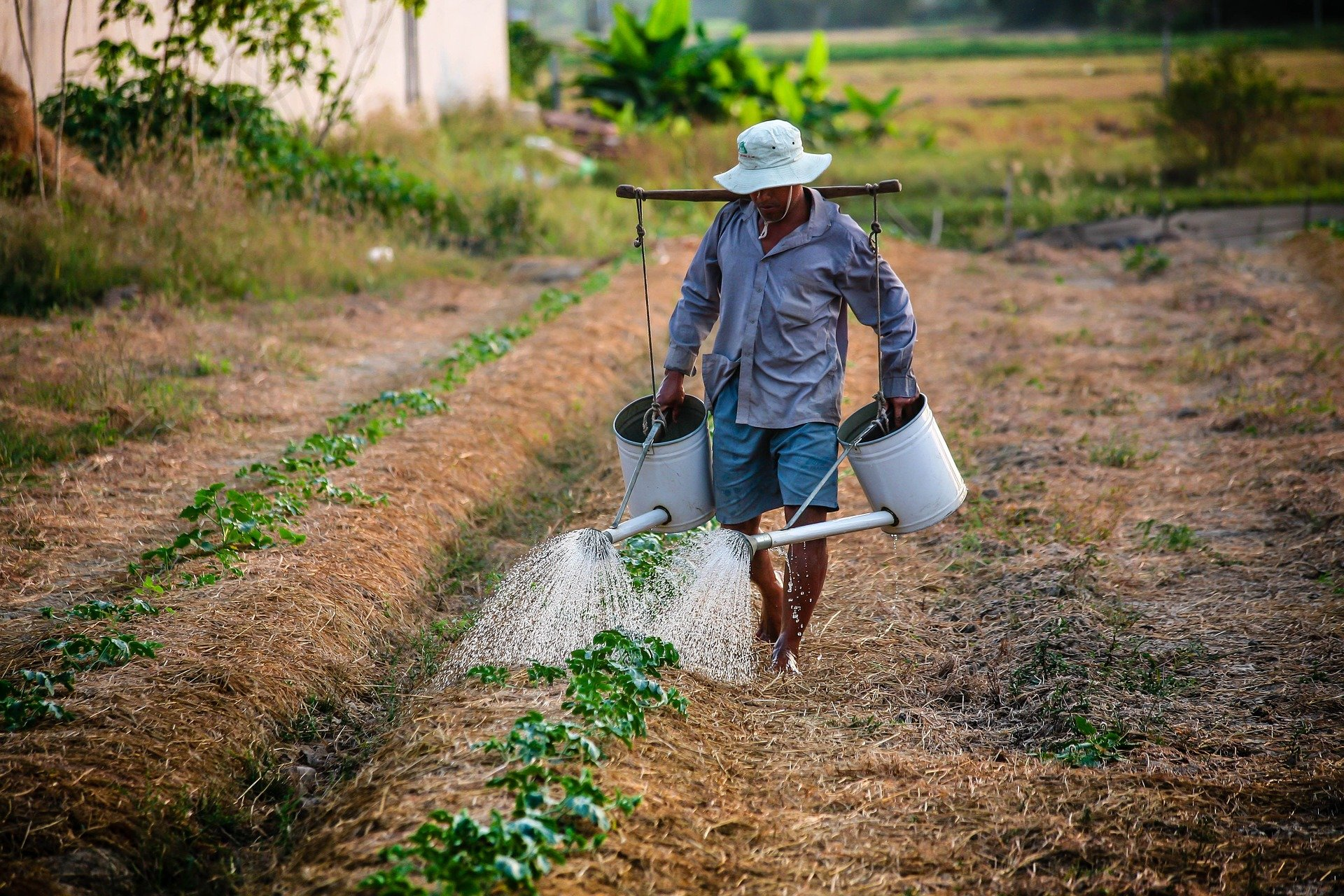 A global mask shortage may leave farmers and farm workers exposed to toxic pesticides